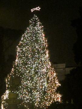 IMG_7360 TREE