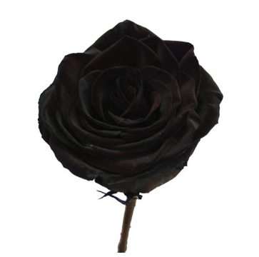 Black roses for any lady. I love the idea of these.
