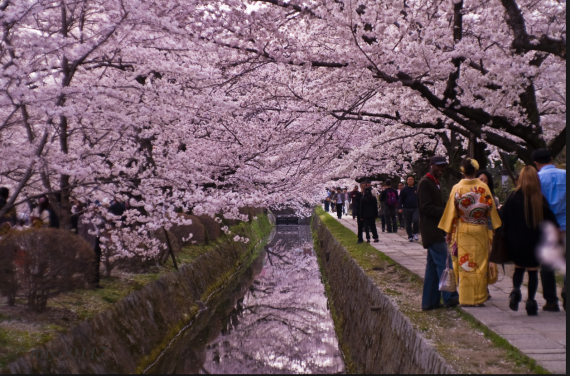 There is nothing quite like the pink of the cherry blossoms in Japan.
